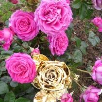 Goldene Rose3