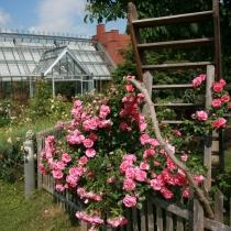 Schaugarten Rosarium Uetersen 07-05-30 (8)
